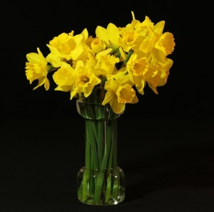 Daffodils and famous Wordsworth poem, at The Longevity Salon